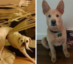 hilarious-guilty-dogs