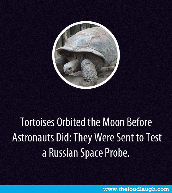 neil armstrong fact monster - photo #48