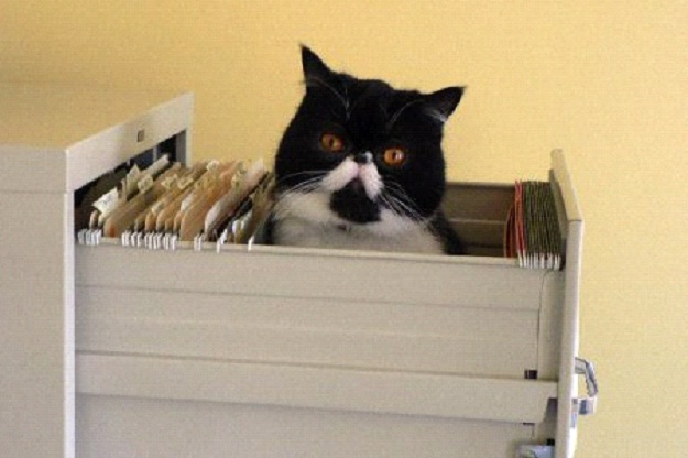 Awesome-Ways-to-Organise-Your-Cats-2