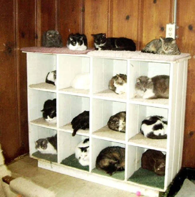 Awesome-Ways-to-Organise-Your-Cats-3