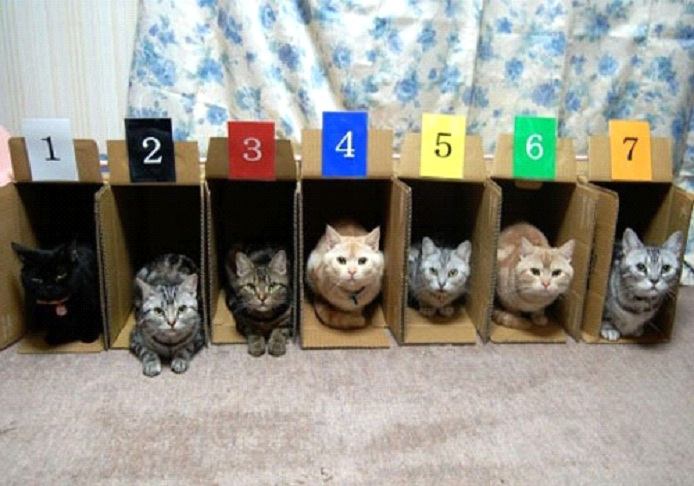 Awesome-Ways-to-Organise-Your-Cats-4