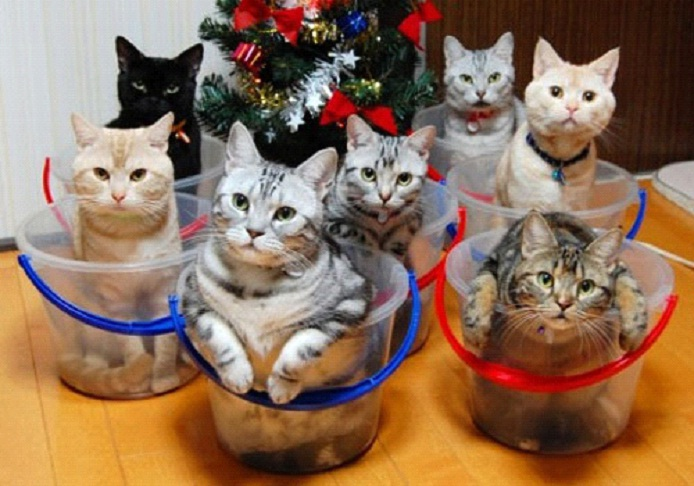 Awesome-Ways-to-Organise-Your-Cats-6