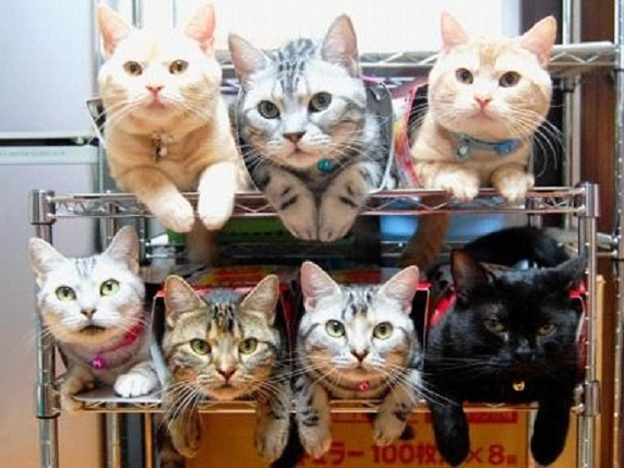 Awesome-Ways-to-Organise-Your-Cats-7