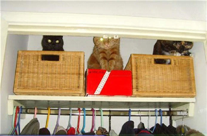 Awesome-Ways-to-Organise-Your-Cats-8
