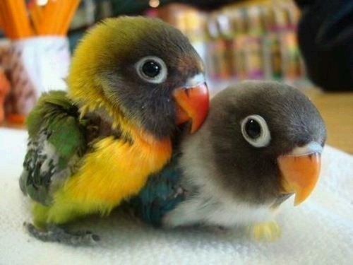 35 insanely cute baby animal pictures 16 is pure