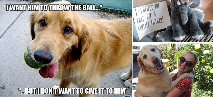 hilarious-dogs