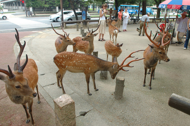 deers everywhere